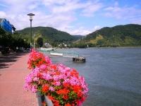 Boppard ved Rhinen